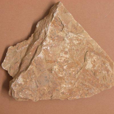 fragments de fulles. La typha latissima, de forma linear, sencera.